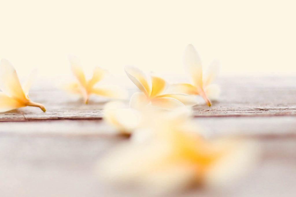gardenias aroma